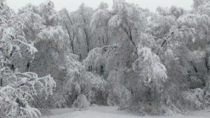 Utah snow